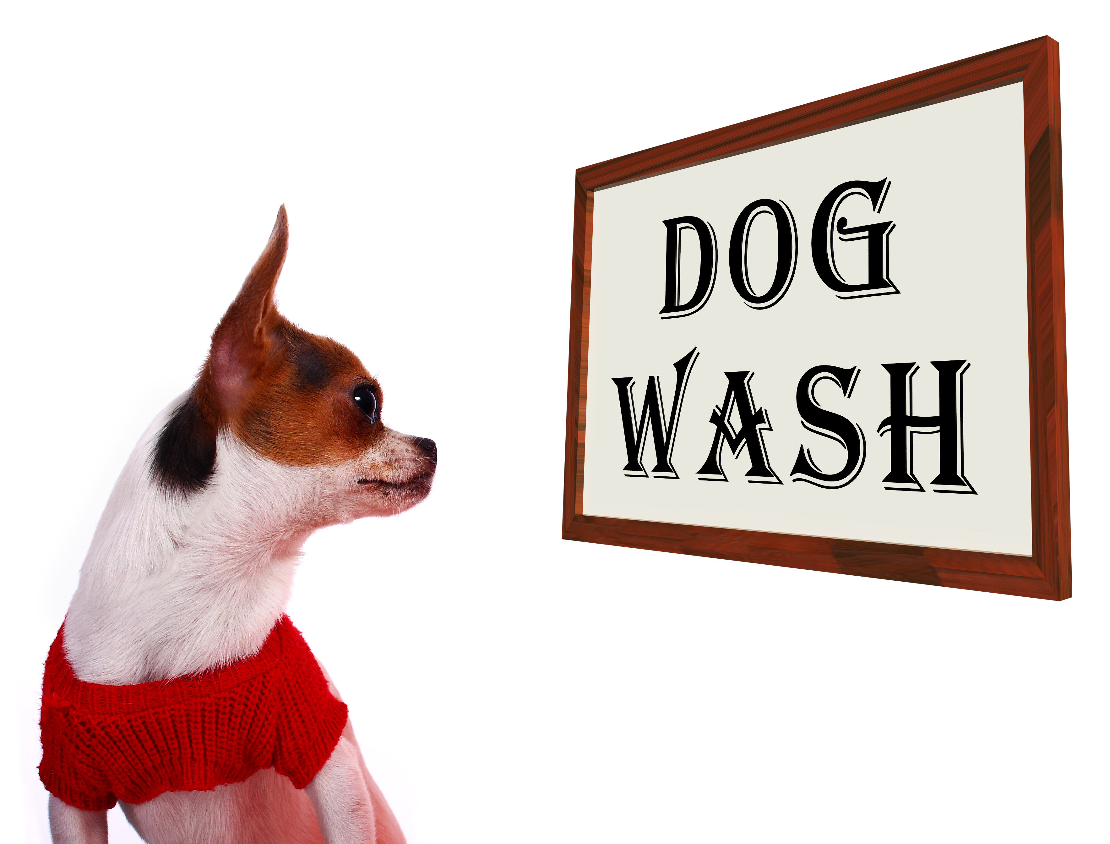 Dog Wash Sign Showing Canine Grooming Washing Or Shampoo
